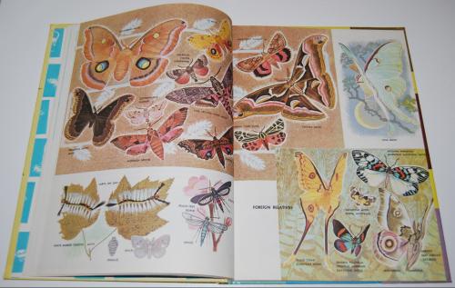 How & why butterflies & moths 5