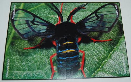 Go bug match card game 5