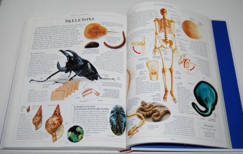 The dk science encyclopedia 15