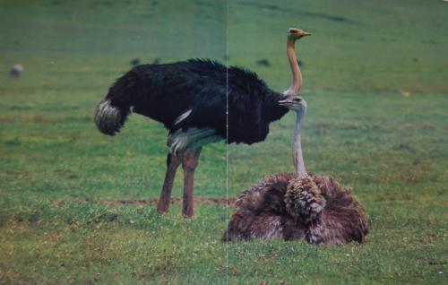 Emus 4