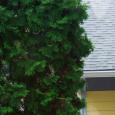 backyard webs