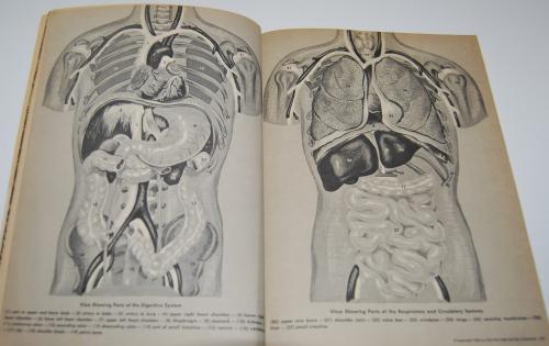 Golden human biology book 4