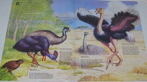 Emus 2