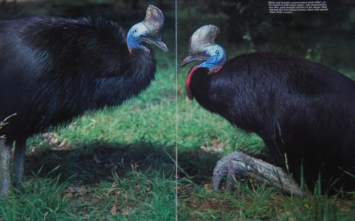 Emus 8