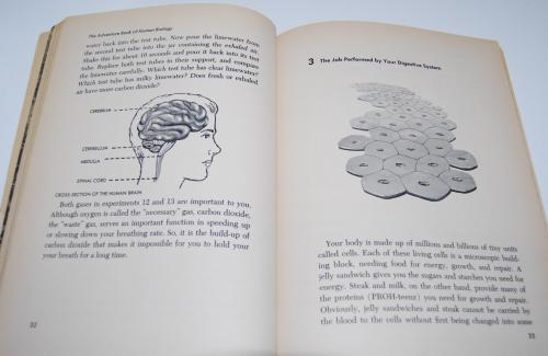 Golden human biology book 5
