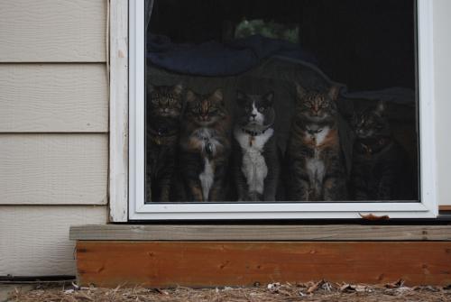 Kittycats