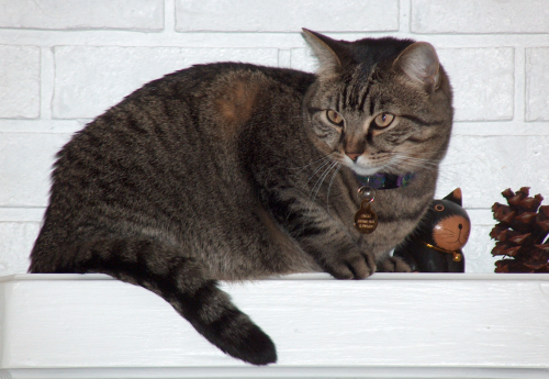 Snug cheshirecat