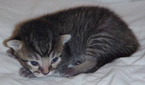 Baby snug