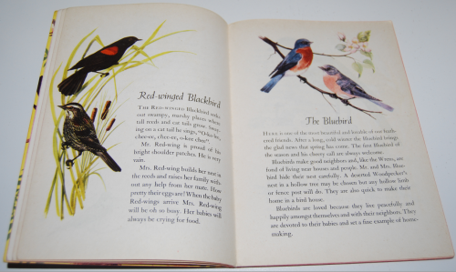 A child's book of birds 4