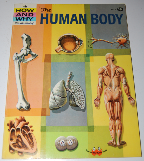 How & why the human body