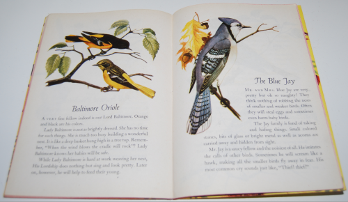 A child's book of birds 7