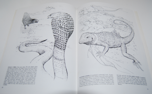 Dover reptiles amphibians 4