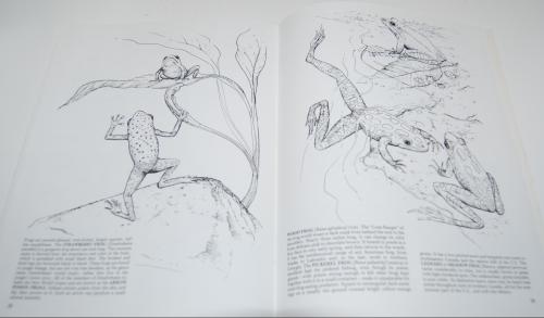 Dover reptiles amphibians 7