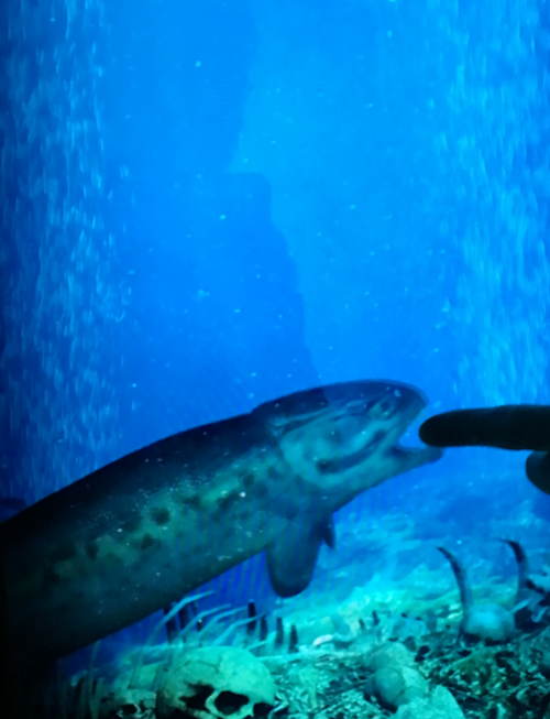 Spirit store aquarium