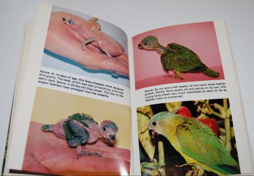 Grey cheeked parakeets 5