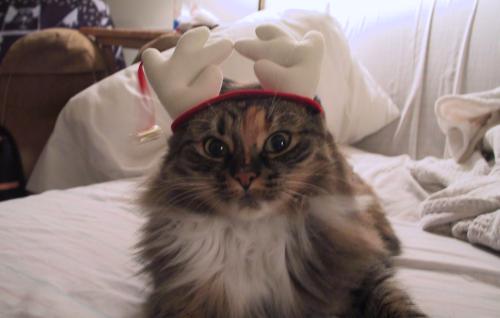 Tabitha's xmas hat