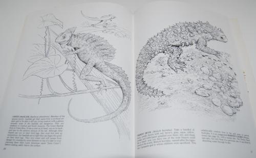 Dover reptiles amphibians 5