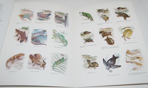 Dover reptiles amphibians 9