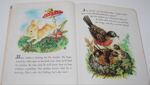 Animal babies little golden book 4