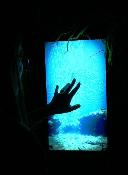 Spirit store aquarium xx