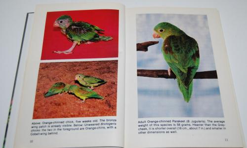 Grey cheeked parakeets 2