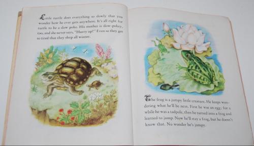 Animal babies little golden book 5