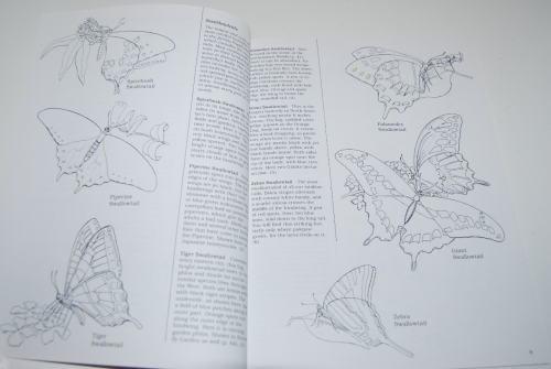 Peterson field guide coloring book butterflies 3