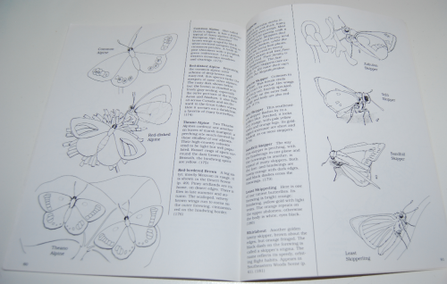 Peterson field guide coloring book butterflies 8