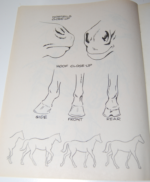 How to draw horses scholastic book 7