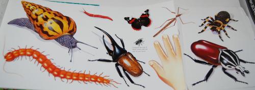 Big bugs book 6