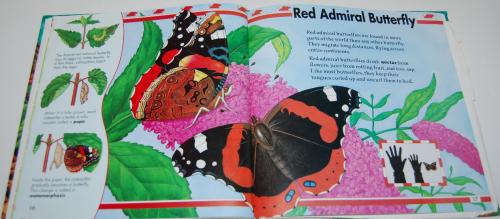 Big bugs book 3