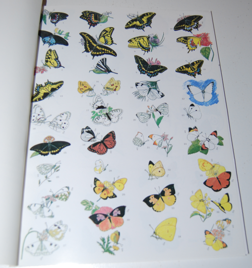 Peterson field guide coloring book butterflies 1