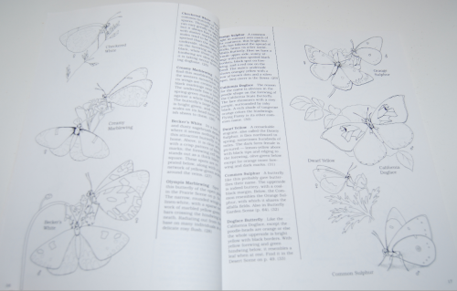 Peterson field guide coloring book butterflies 4