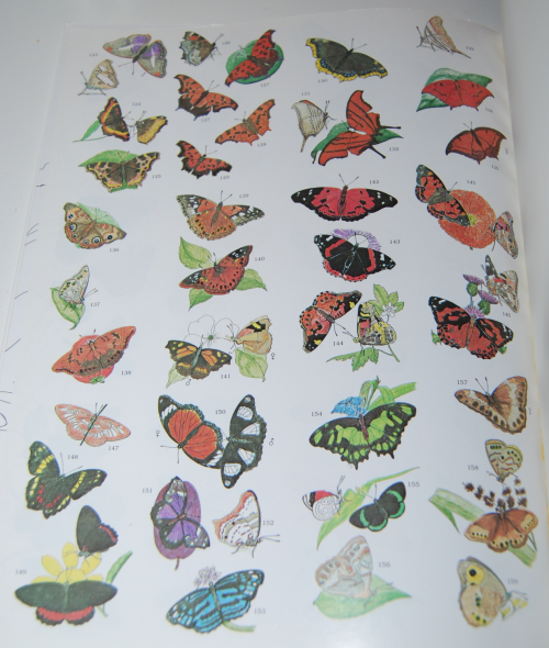 Peterson field guide coloring book butterflies 9