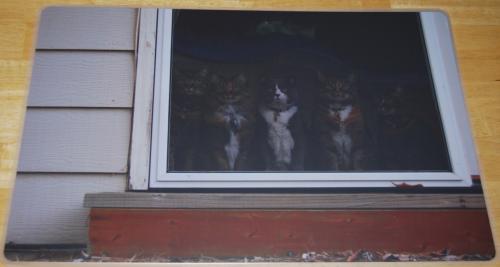 Shutterfly cats