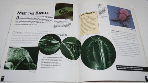 Bugs scholastic book 3