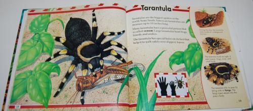 Big bugs book 4