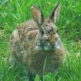bunny seems tharn