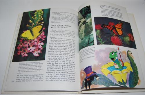 Disney's wonderful world of knowledge 22