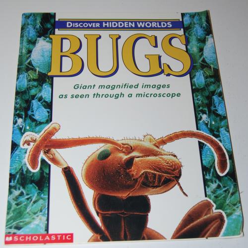 Bugs scholastic book