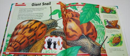 Big bugs book 2