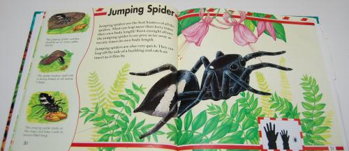 Big bugs book 5