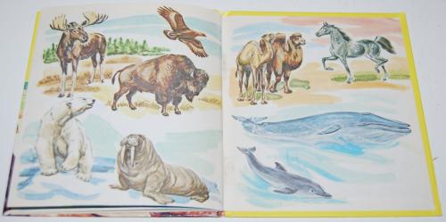 Big animals 12