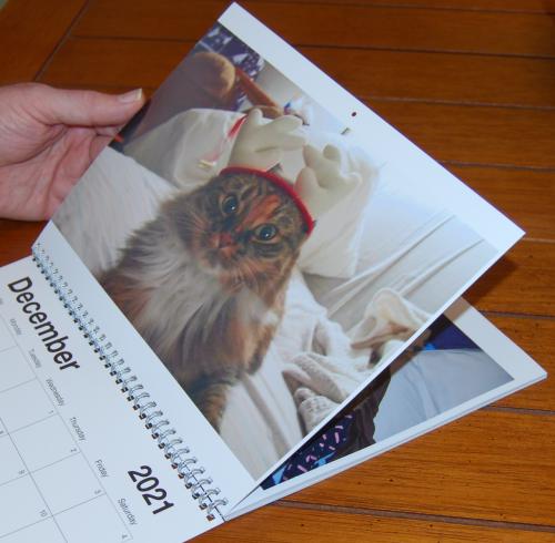 2021 calendar cats pittypats 3