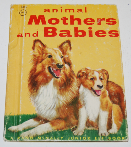 Animal mothers & babies