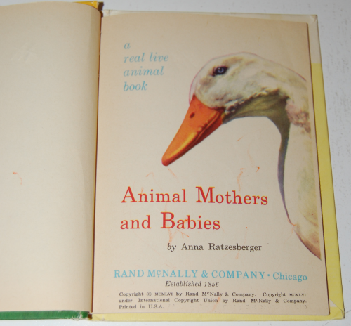Animal mothers & babies 1