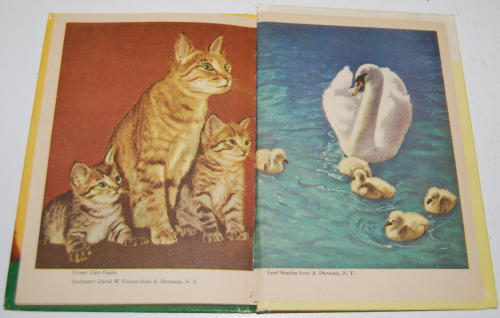 Animal mothers & babies 7