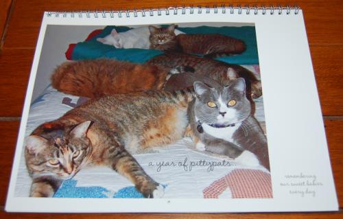 2021 calendar cats pittypats