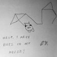 help, i have bats in my house!
