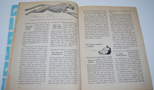 How & why book of wild animals 6